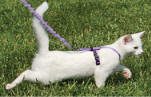 Kitty Cat Harness Bungee Leash
